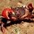 :CrabDance: